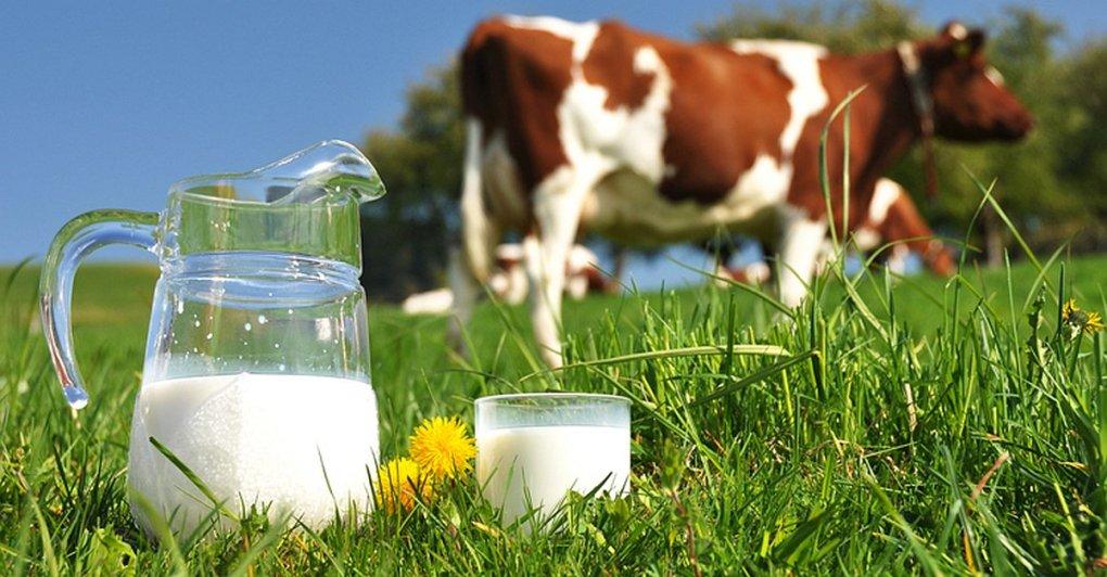 leite-de-vaca-vaca-leite-Soja-amêndoa-avelã-arroz-proteína-calorias-gorduras-saudável-intolerância-substituir-3